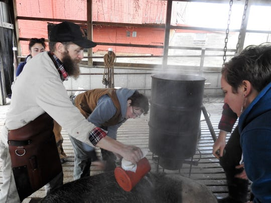 Andy Lane of Hand Hewn Farm pours hot water over a hog while members of a recent workshop look on. The hot water is used to loosen hair so it can be scraped off the pig before further processing.