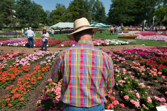 Merle Moore wears a colorful shirt as he inspects rows of flowers while judging plants for vigor and vibrance at the CSU Flower Trial Gardens on Tuesday, August 7, 2018.