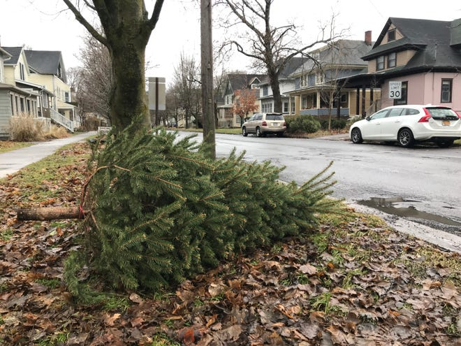 There are other places for your tree to end up other than the curb.