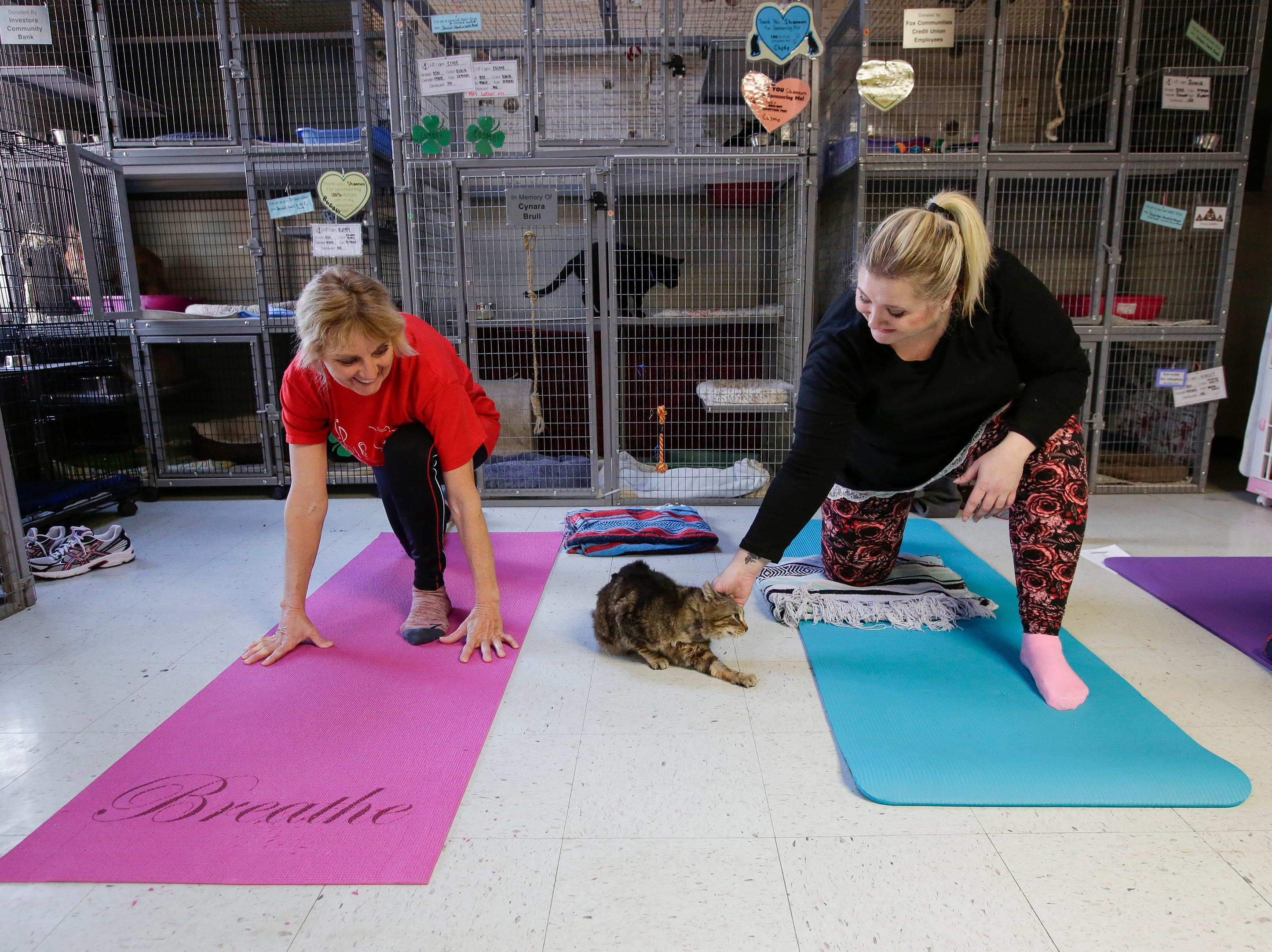 Mary Beth Kardon, left, and Shaye Van enjoy the company of Reeses during Cats on Mats yoga at the Lakeshore Humane Society Tuesday, Mar. 27, 2018, in Manitowoc, Wis. Josh Clark/USA TODAY NETWORK-Wisconsin