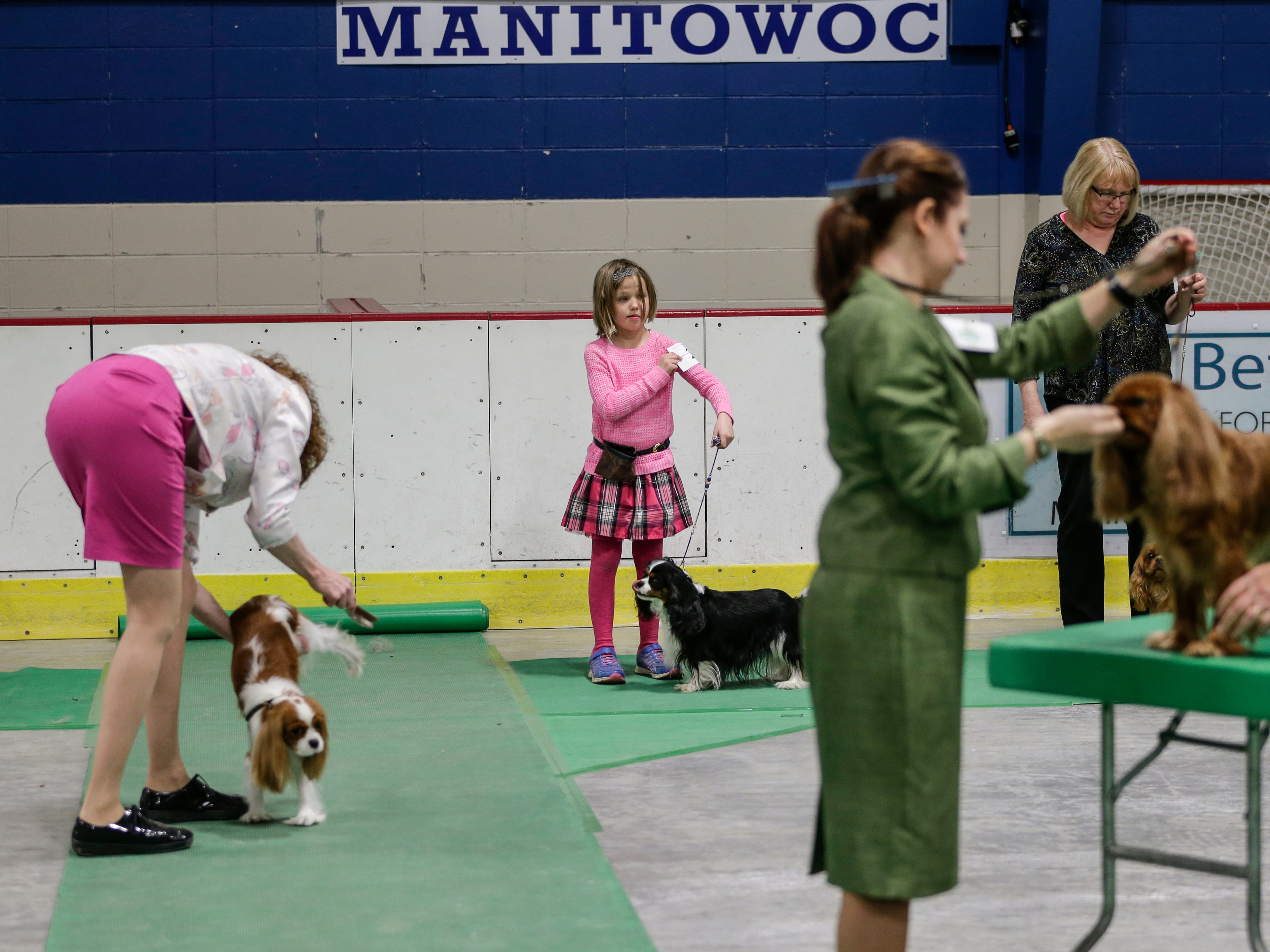 Kryssi Higgenson, 8, of Lake Geneva waits for the judging of her Cavalier King Charles Spaniel, Zana, during the Northeast Wisconsin Dog Show Classic Friday, Mar. 30, 2018, in Manitowoc, Wis. Handlers of any age can show a dog as long as they can handle the animal. Josh Clark/USA TODAY NETWORK-Wisconsin