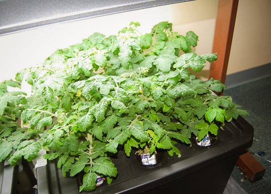 The hydroponics garden in Adrian Gaytan's classroom at Zia Middle School started with assistance from New Mexico State University's Cooperative Extension Service in Doña Ana County in 2017.