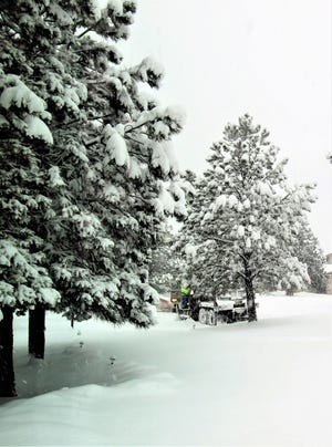 Tree trunks are buried in snow around Ruidoso, but will benefit from moisture  being given time to sink into the soil before the deep covering melts.
