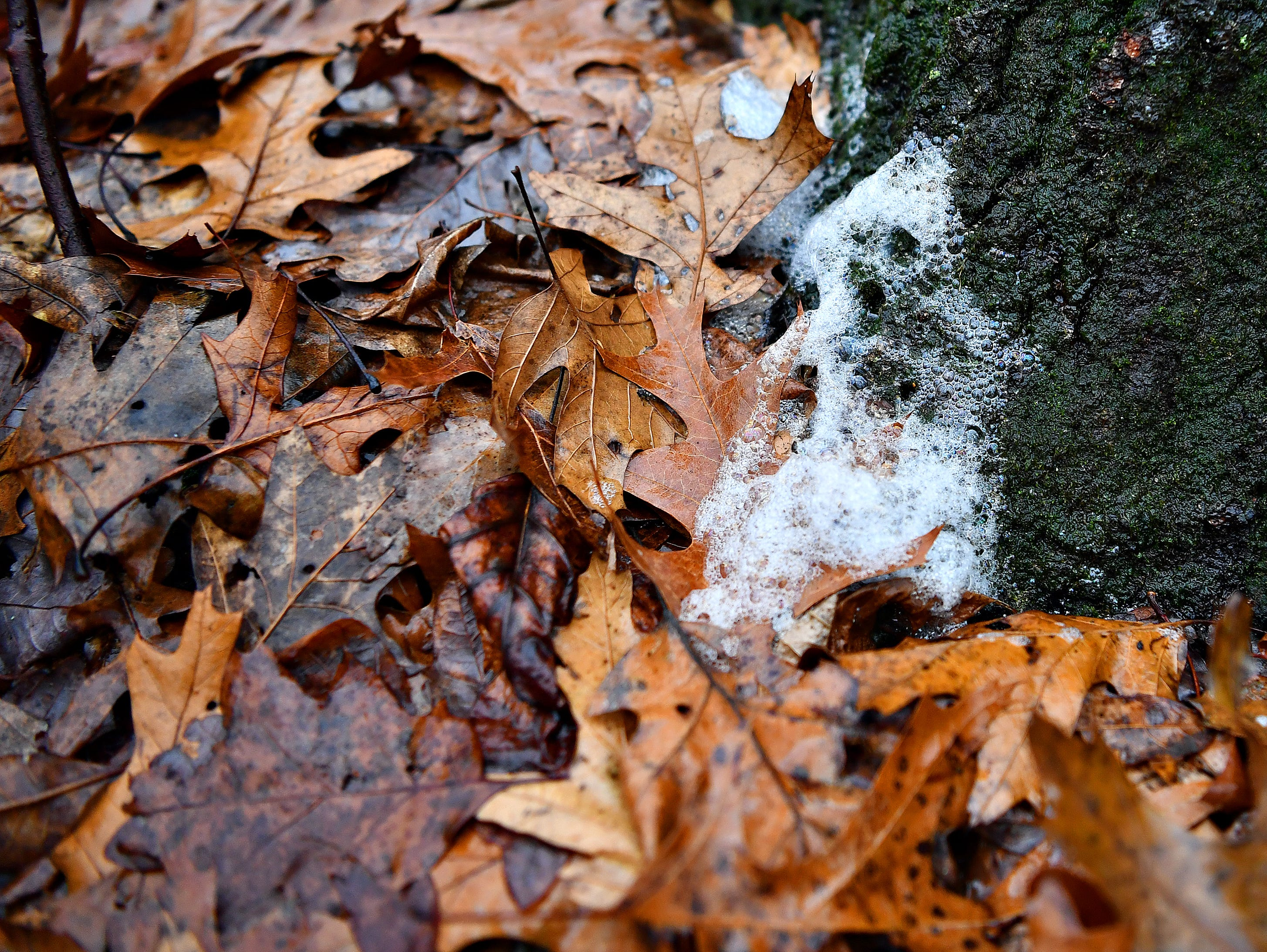 A foamy substance is seen at the base of a tree as York County Parks Naturalist Kelsey Frey leads a Marshmallow Hike at Rocky Ridge Park in Springettsbury Township, Friday, Dec. 28, 2018. Dawn J. Sagert photo