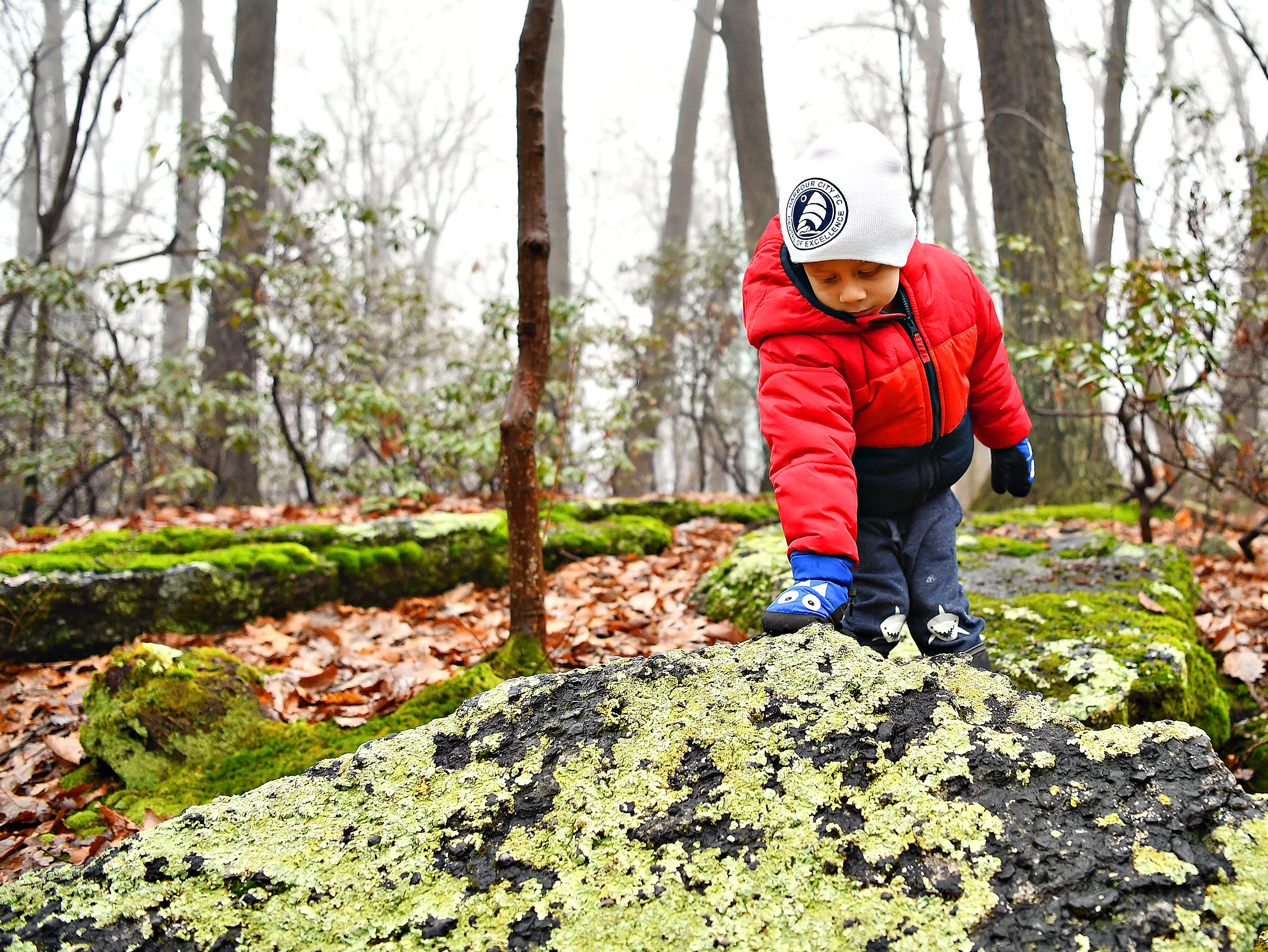 Tiago Hernandez, 4, of Yucatan, Mexico, examines moss-covered rocks during a Marshmallow Hike at Rocky Ridge Park in Springettsbury Township, Friday, Dec. 28, 2018. Dawn J. Sagert photo