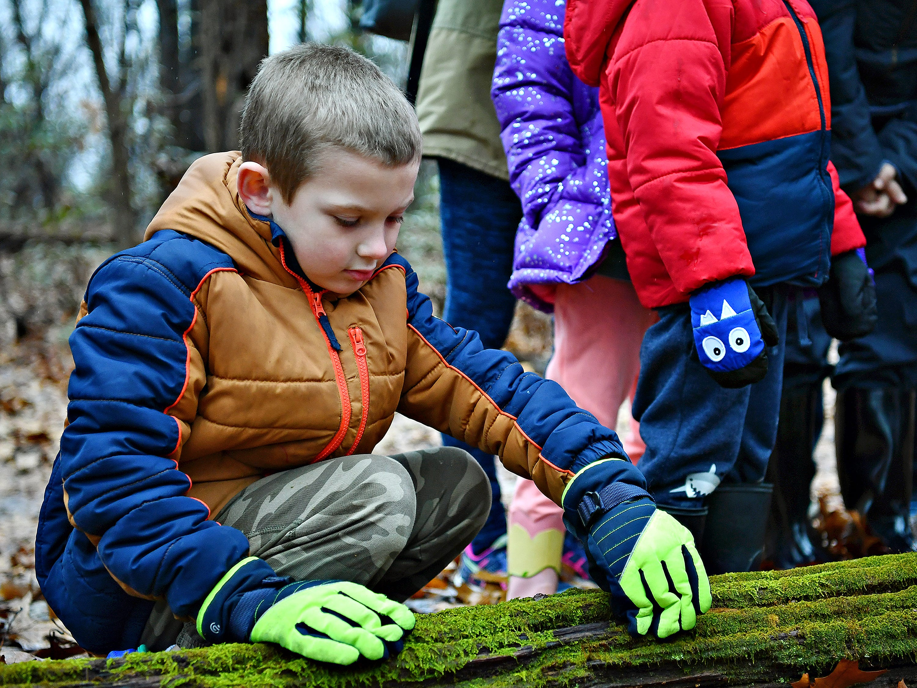 Lucas Buckler, 6, of East Manchester Township, examines a moss-covered log during a Marshmallow Hike at Rocky Ridge Park in Springettsbury Township, Friday, Dec. 28, 2018. Dawn J. Sagert photo