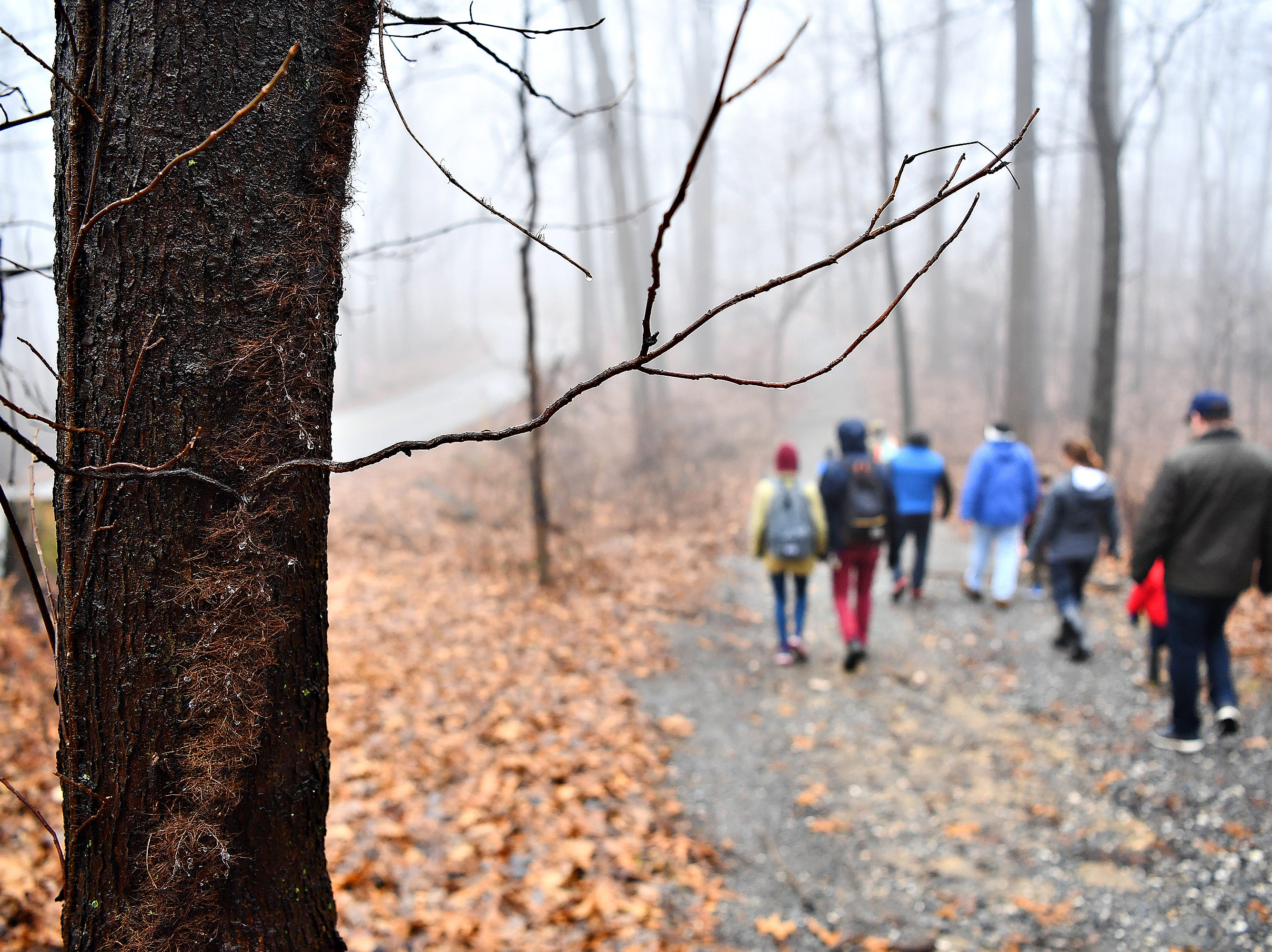 Poison Ivy vine and branches are seen on a tree during a Marshmallow Hike at Rocky Ridge Park in Springettsbury Township, Friday, Dec. 28, 2018. Dawn J. Sagert photo