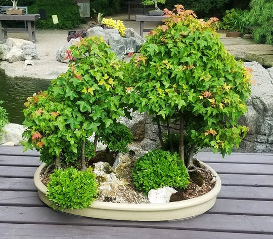 Bonsai pots can contain both trees and shrubs to simulate a mini landscape.