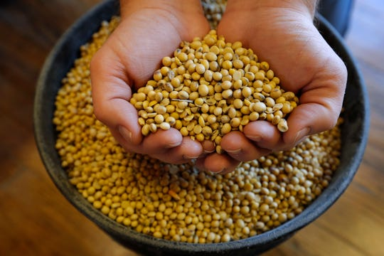 FILE  - In this Nov. 21, 2018, file photo, Justin Roth holds a handful of soybeans at the Brooklyn Elevator in Brooklyn, Iowa. The government shutdown could complicate things for farmers lining up for federal payments to ease the burden of President Donald Trump's trade war with China. The USDA last week assured farmers that direct payments would keep going out during the first week of the shutdown. But payments will soon be suspended for farmers who haven't certified production. Farm loans and disaster assistance programs will also be on hold.  (AP Photo/Charlie Neibergall, File)