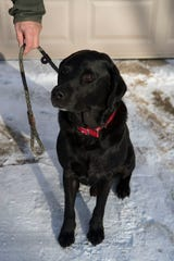 Dan Buenher's nine-year-old dog Husker is a Labrador Retriever, which is the most common dog breed in Sioux Falls in 2018.