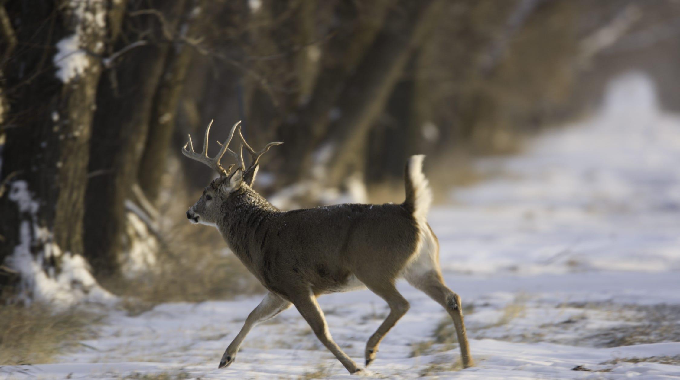 Fewer deer, one hunter killed on opening weekend
