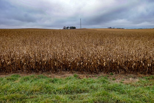 Fields of corn dominate the landscape around Brooklyn. Mollie Tibbett's body was found hidden by cornstalks in a field outside Guernsey, Iowa.