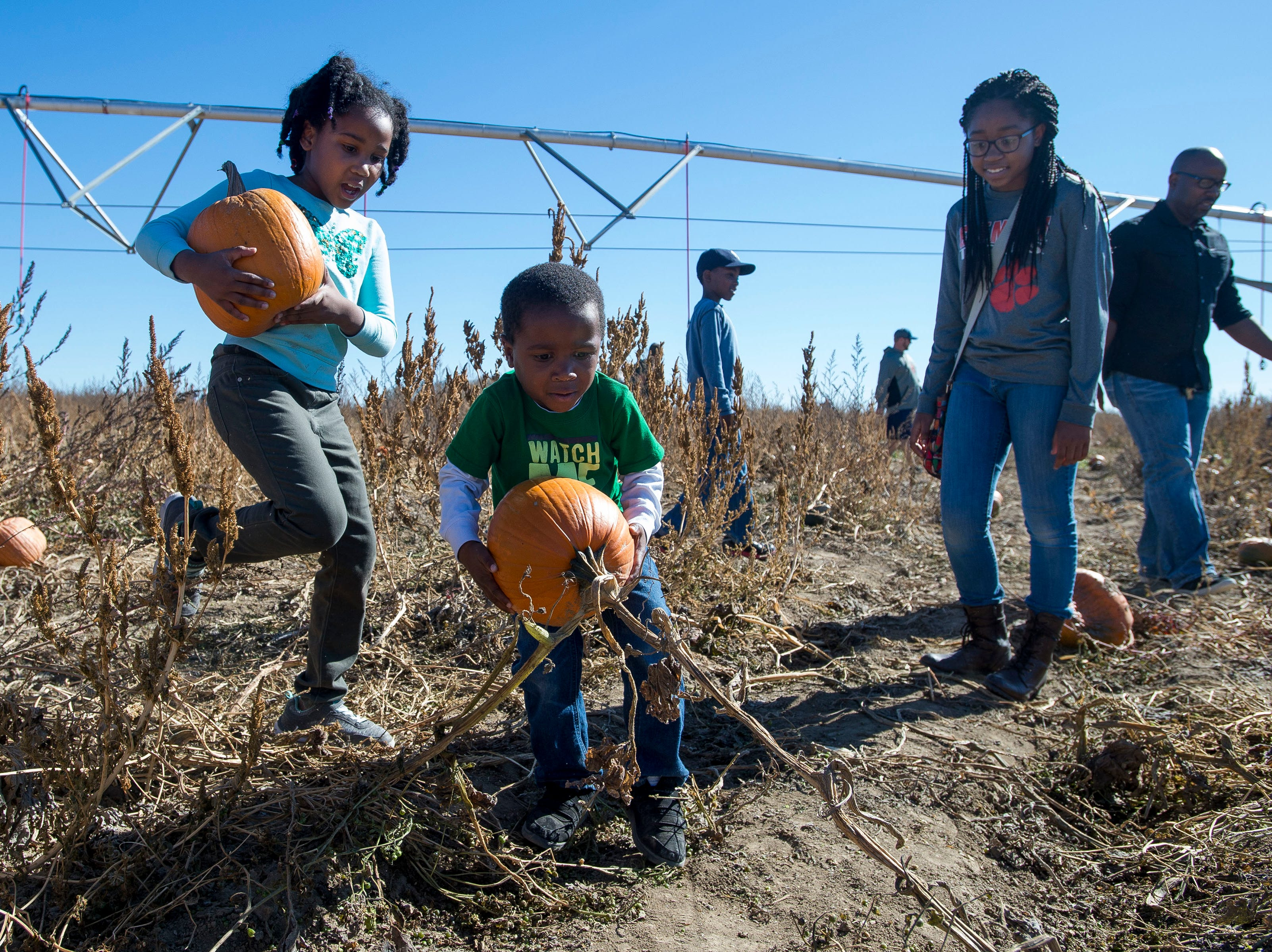 Four-year-old Xavier Wilson picks up a pumpkin while big sisters Rebekah, 13, and Elisabeth, 7, look on while his father James and older brother Darian keep looking on Saturday, Oct. 20, 2018, at the Bartels Farm in Fort Collins, Colo.