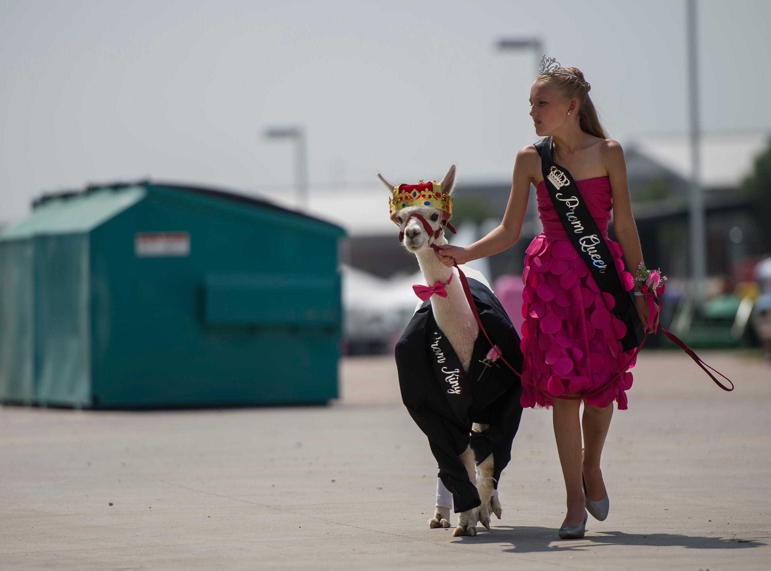 Kashleigh Kilker walks her alpaca, Larry, outside to calm him after getting dressed as her prom king before the costume contest at the Larimer County Fair on Thursday, Aug. 2, 2018, at The Ranch Events Complex in Loveland , Colo.