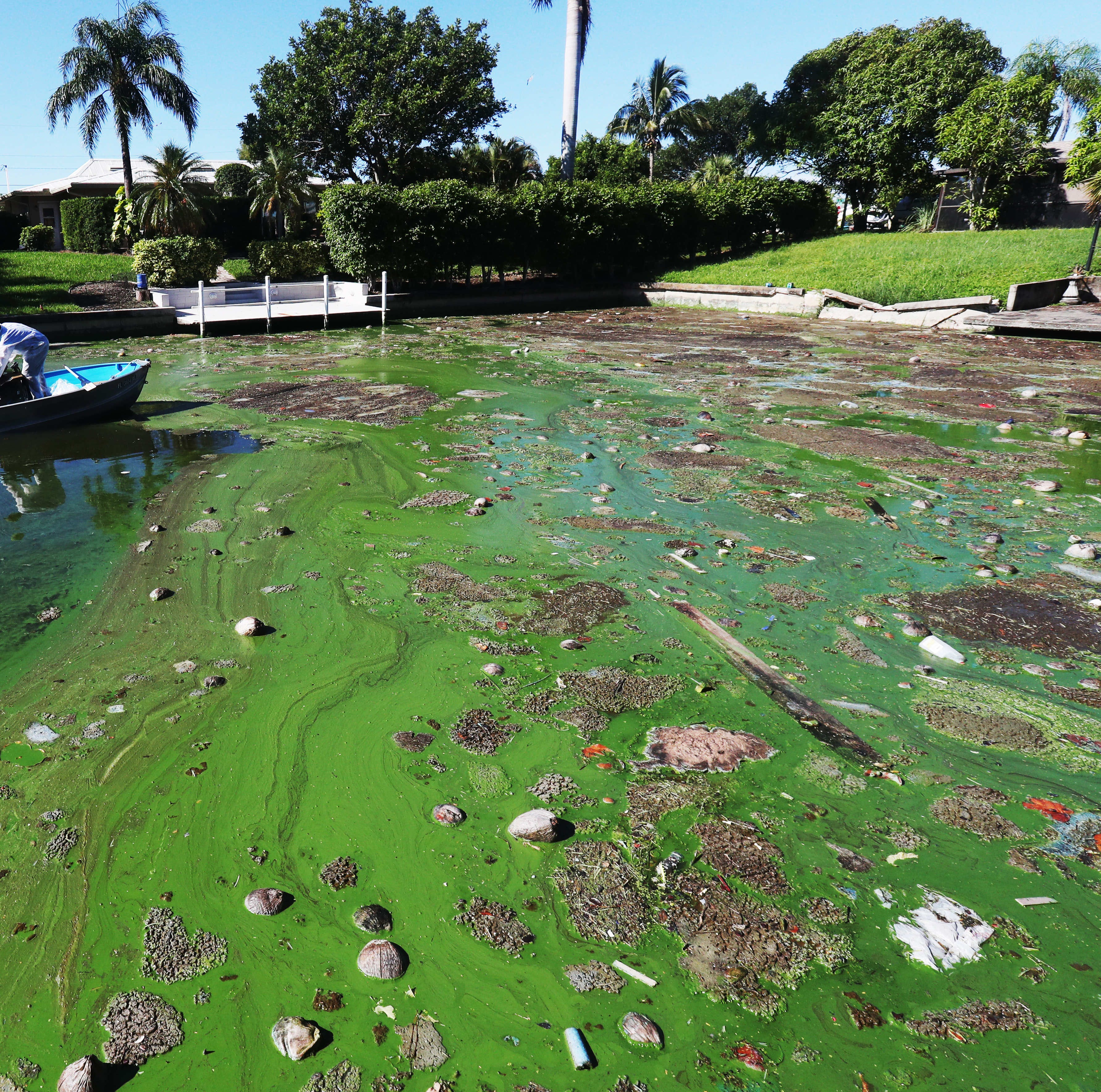 Algae crisis: Airborne particles of toxic cyanobacteria can travel more than a mile inland, new FGCU study shows