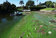 An algae infested canal is shown near the Midpoint Bridge in Lee County on Tuesday 9/28/2018.