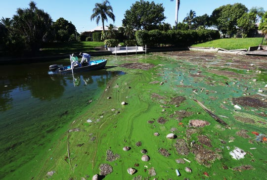 Gavin Lau and Joshua Davidson from organic laboratories take a water sample from an algae-infected channel close to Midpoint Bridge on Tuesday, 9/28/2018. Cape Coral-based organic laboratories have a possible solution to the algae problem that plagues Cape Coral and Southwest Florida waters. They received a letter without objection to begin testing a section of this channel. They took water samples on Tuesday, 9/28/2018. The process involves a denitrification process.