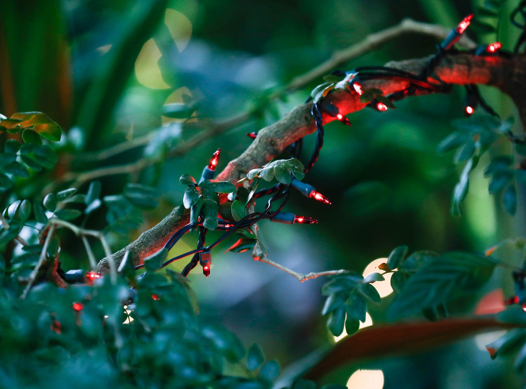 Christmas lights decorate a tropical tree in the Conservatory Crossing holiday display at the Garfield Park Conservatory on Saturday, Dec. 29, 2018.