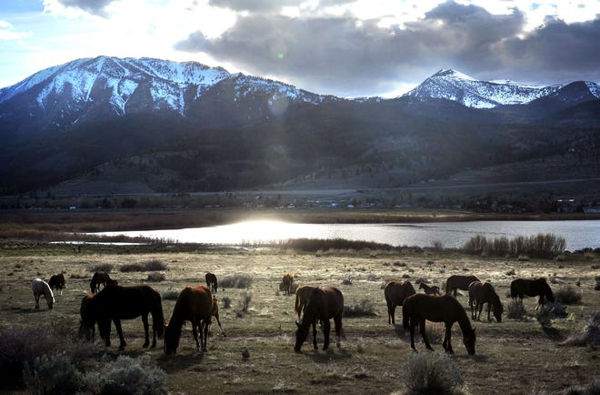 A herd of wild horses is seen in the Washoe Valley just south of Reno on April 21, 2018.