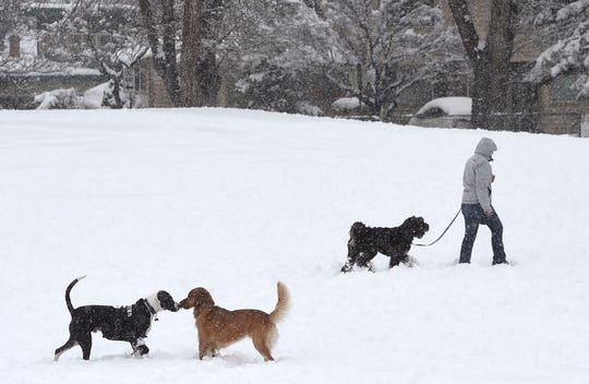 People and dogs play in the fresh snow at Plumas Park in Reno on March 16, 2018.