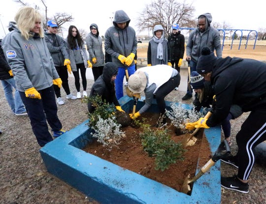 A group from the University of Pittsburgh athletic department plant shrubs in the playground area of Veterans Park in Northeast El Paso Friday.
