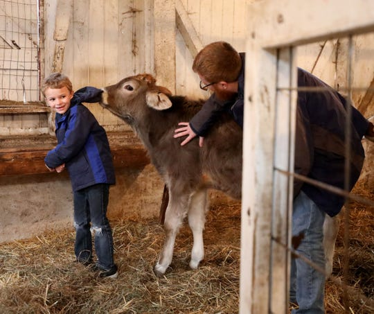 Harrison Kloehn, 7 1/2, from Valhalla gets up close and personal with a 5-month old Brown Swiss calf at the Alfred B. Delbello Muscoot Farm Park in Somers, as Jonathon Benjamin, the curator prepares the animals for the winter months, Dec. 29, 2018.