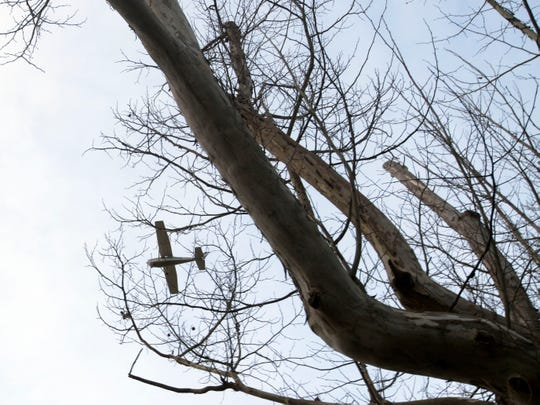Victor Ashe Island Home Tree Cutting Halted After Resident Complaints
