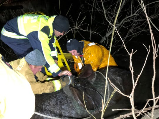 Rescue workers tend to Tucker, a horse that became trapped in mud Saturday in Wonder Lake State Park in Patterson.