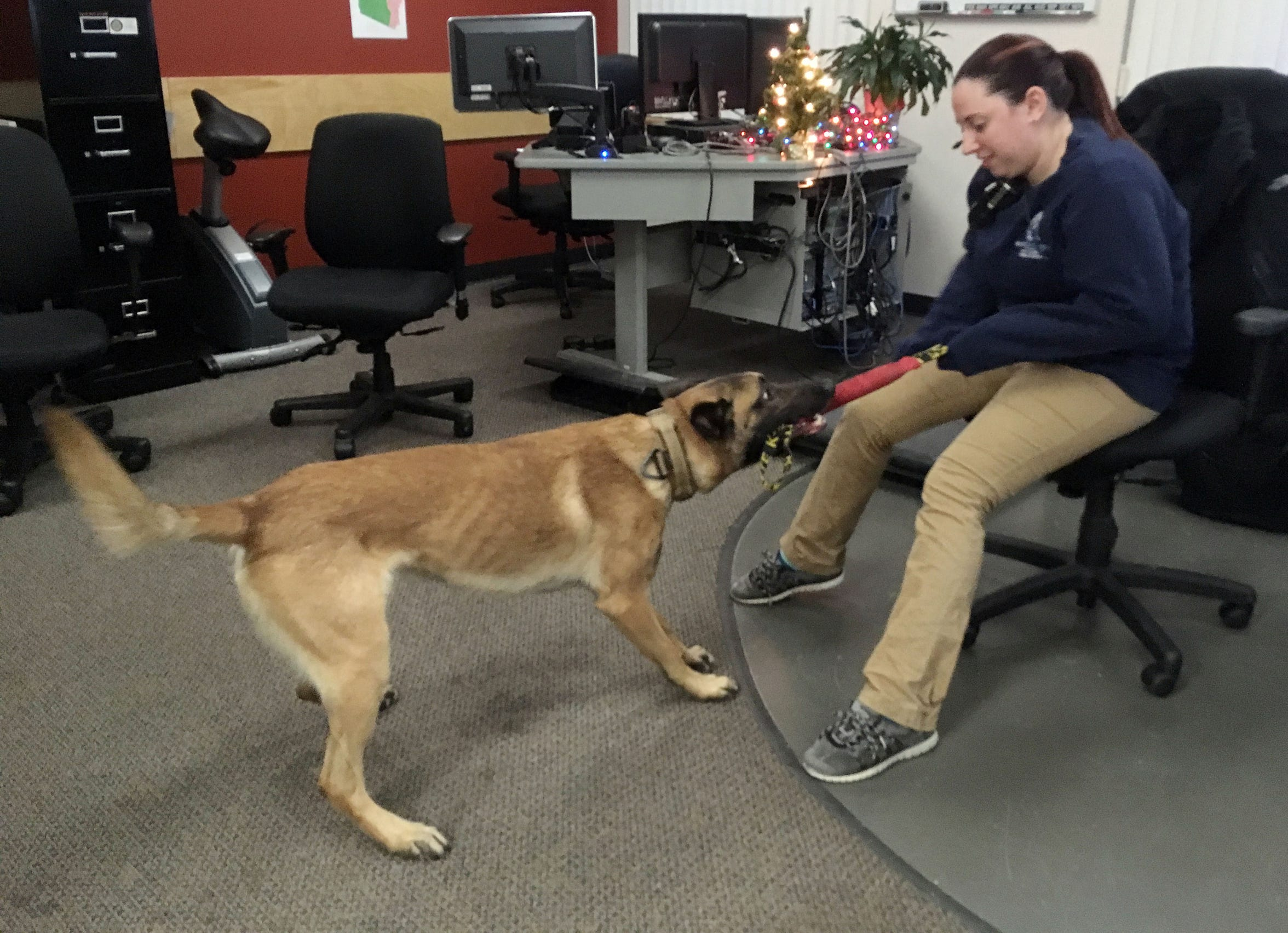 Dispatcher Michele Shepard plays tug-of-war with K9 Rush during a brief lull in phone calls on Dec. 6, 2018.
