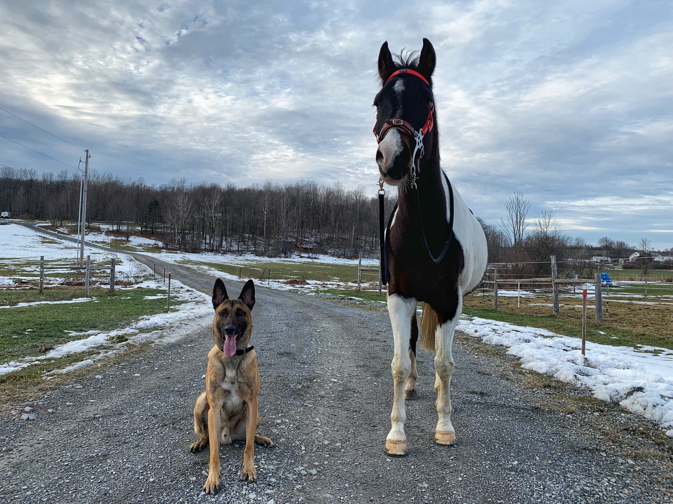 South Burlington Police K9 Rush poses with one of his horse brothers, Rowan, on Dec. 20, 2018.