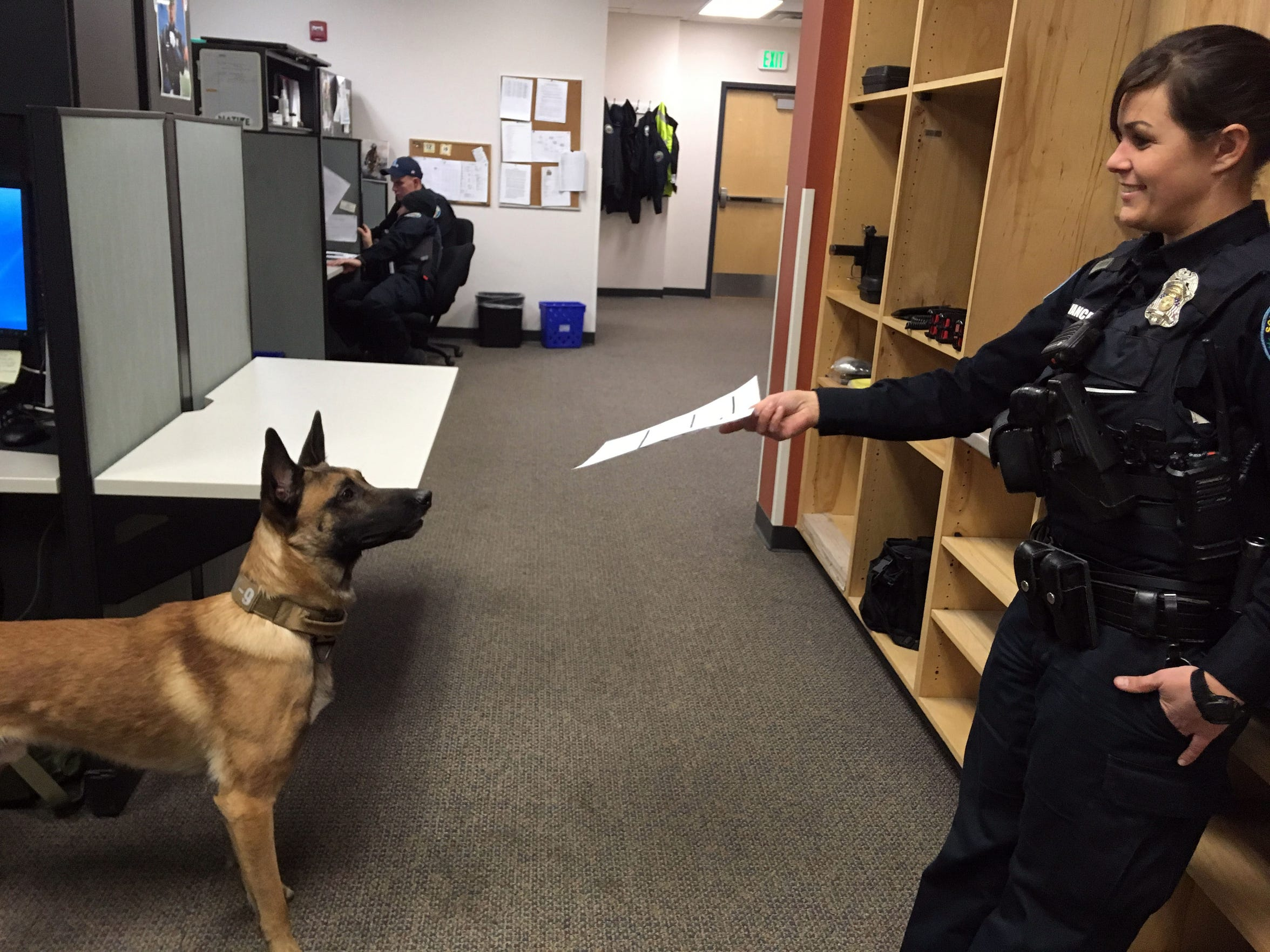South Burlington Police Officer Sarah Bellavance offers a piece of paper to K9 Rush, who thinks it's a toy on Dec. 6, 2018.