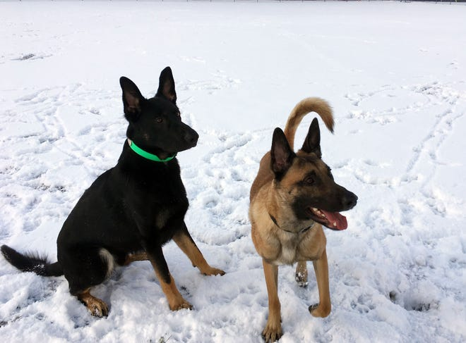 A Day In The Life Of A Vermont Police K9 Team