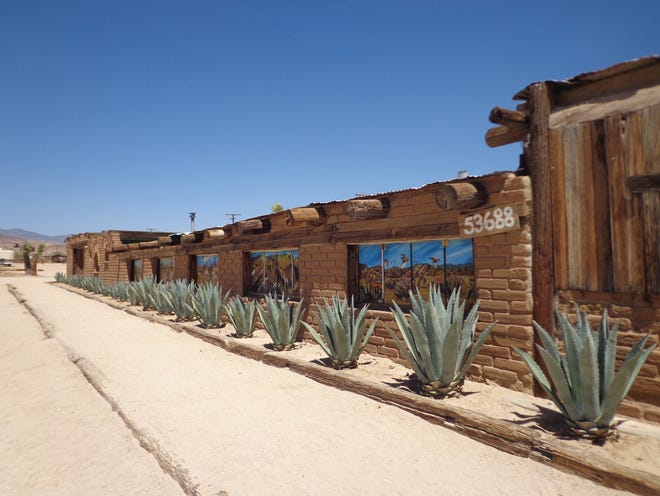 Agave americana is valued for its uniformity of growth that is used differently in the landscape.