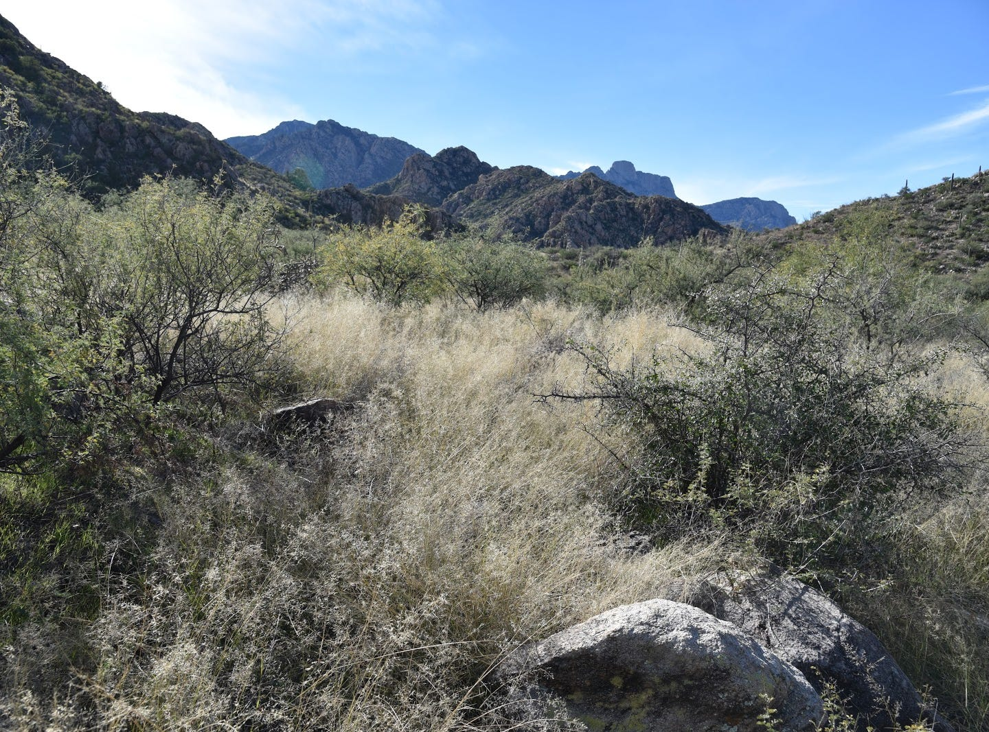 Views of Pusch Ridge and the Santa Catalina Mountains from the Sutherland Trail.