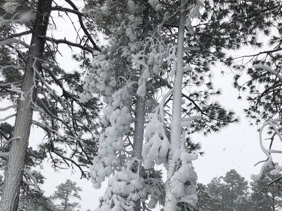 Snow blanketed the Flagstaff area on Dec. 31, 2018.