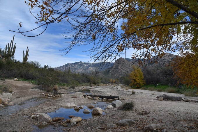 Sutherland Wash in Catalina State Park in Tucson.