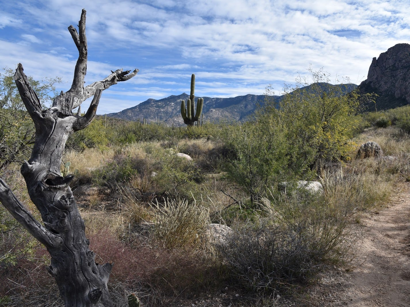 At the edge of the Catalina State Park boundary, the trail feels more wild.