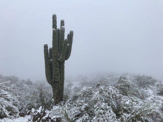 snow arizona