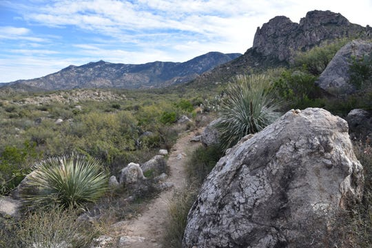 The beautiful Santa Catalina Mountains.