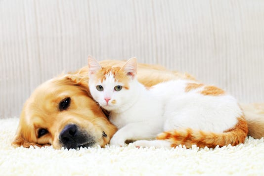 Friendship Of A Dog And Cat