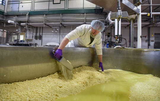 Michigan State University  Dairy production technician Joshua Hall separates the makings of cheddar cheese curds while draining off whey, Monday, Dec. 3, 2018, at the MSU Dairy Plant in East Lansing.