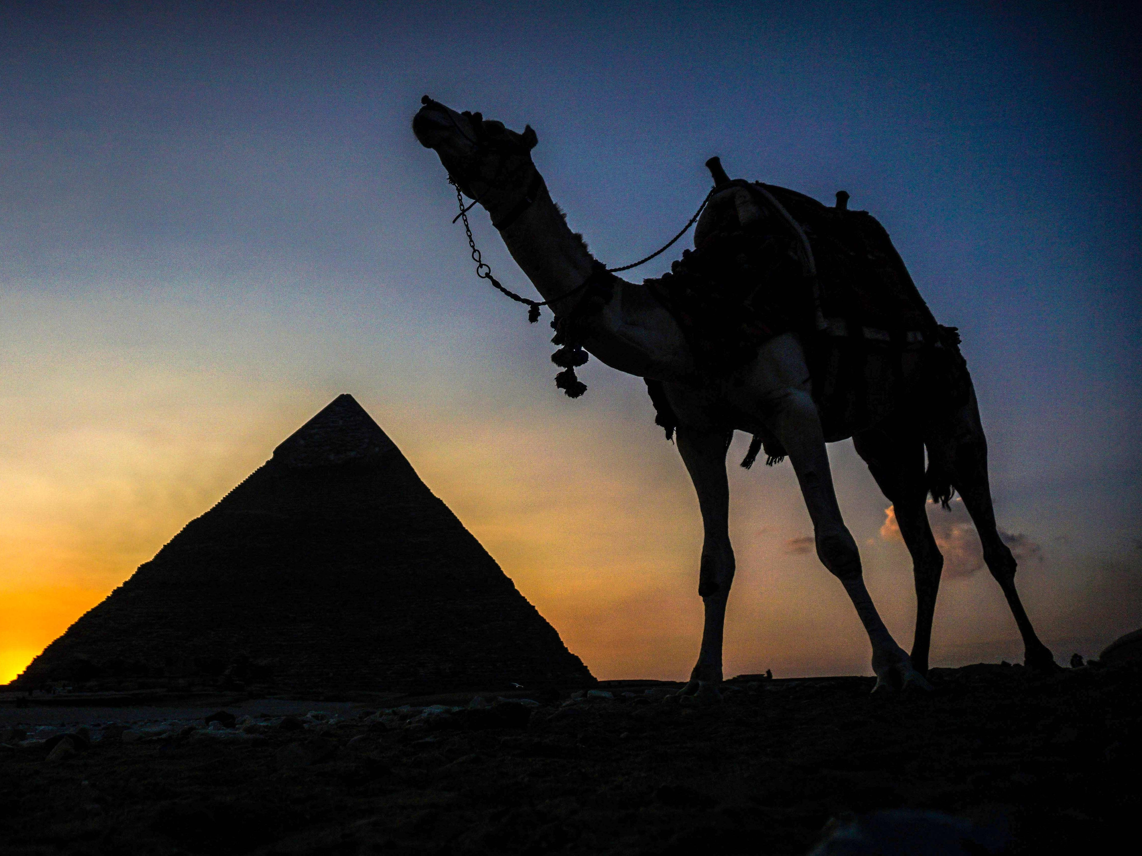 A camel walks past the pyramid of Khafre (also known as Chephren) at the Giza pyramids necropolis on the southwestern outskirts of the Egyptian capital Cairo on Dec. 21, 2018.