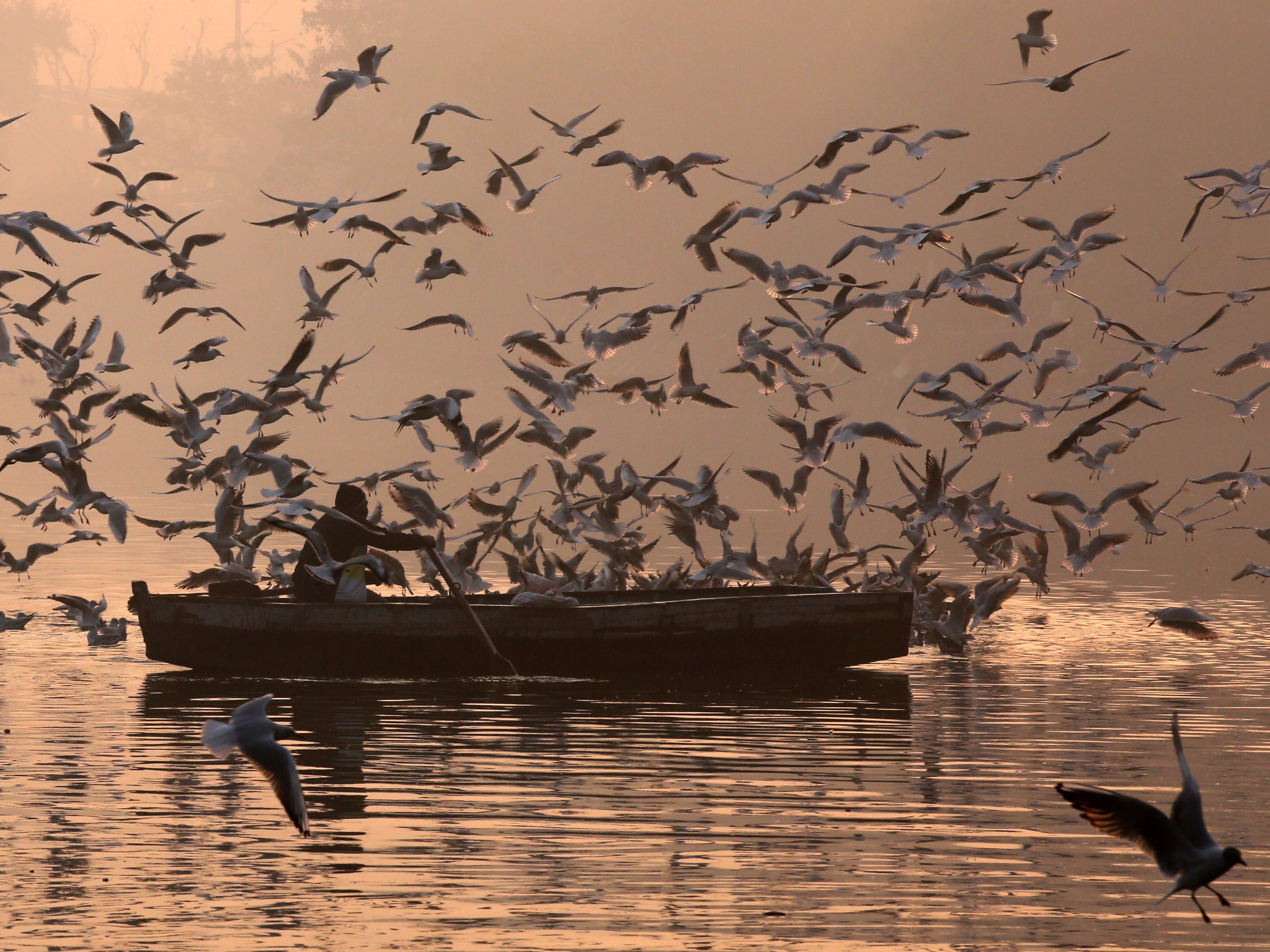 A boatman rows his boat through migratory birds on a foggy morning in the polluted Yamuna River in New Delhi, India,  Dec. 29, 2018. Migratory birds arrive in the winter season from different parts of India and neighboring countries and are expected to leave in March 2019.