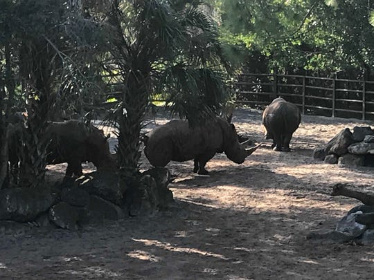 A child fell into a rhino exhibit at the Brevard Zoo on Tuesday, Jan. 1, 2019.