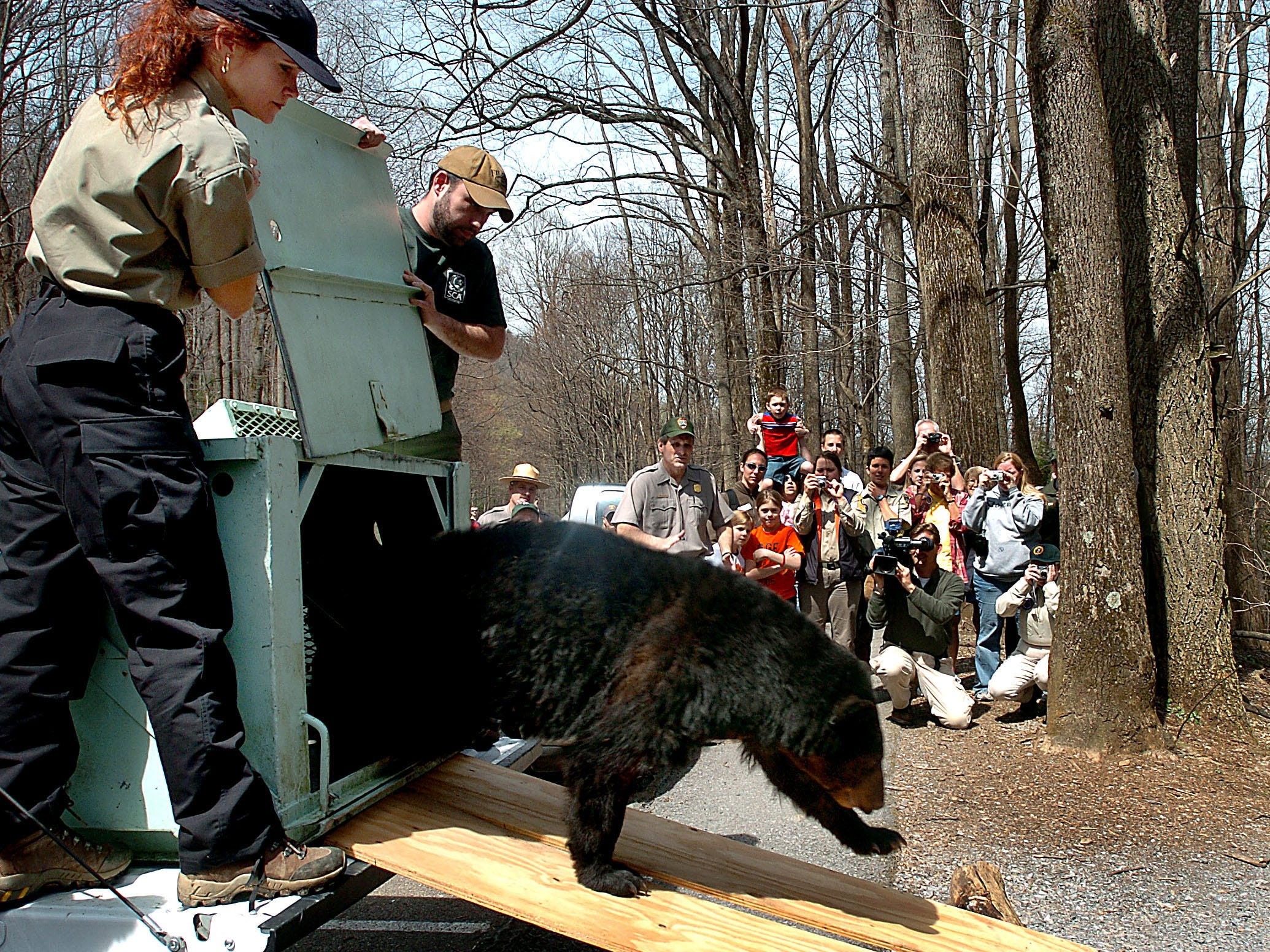 Lisa Stewart, left, and Scott Sharp hold open the door to the cage releasing Chester into the Great Smoky Mountains National Park. The 2-year-old male black bear was only 28-pounds and injured when found and Monday during the final pre-release examination the he weighed 189-pounds. 2005