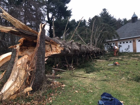 High winds toppled an over 80-foot tall Norway Spruce at Ann Brown's house on Millsboro Road on New Year's Eve.