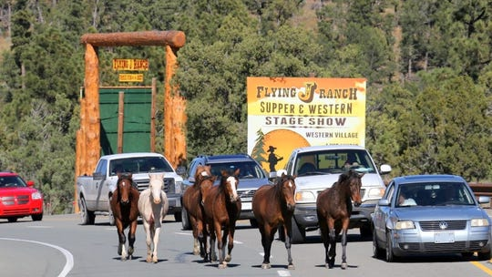 Wild horses pass the Flying J Ranch on their first trip in the Alto are north of Ruidoso since being rounded up in 2016. Motorists were delighted and photographs surfaced on social media.