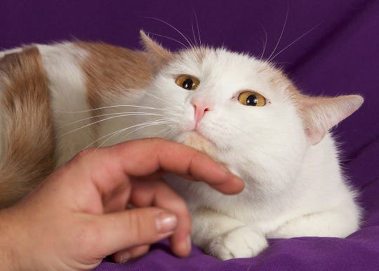 Duke is at Friends for Life, 952 W. Melody Avenue in Gilbert. Call 480-497-8296, email FFLcats@azfriends.org or visit online at www.azfriends.org.