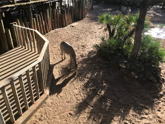 "Officials at the Brevard Zoo said that the child fell through the steel poles that separate guests and rhinos during a ""hands-on, educational experience."""