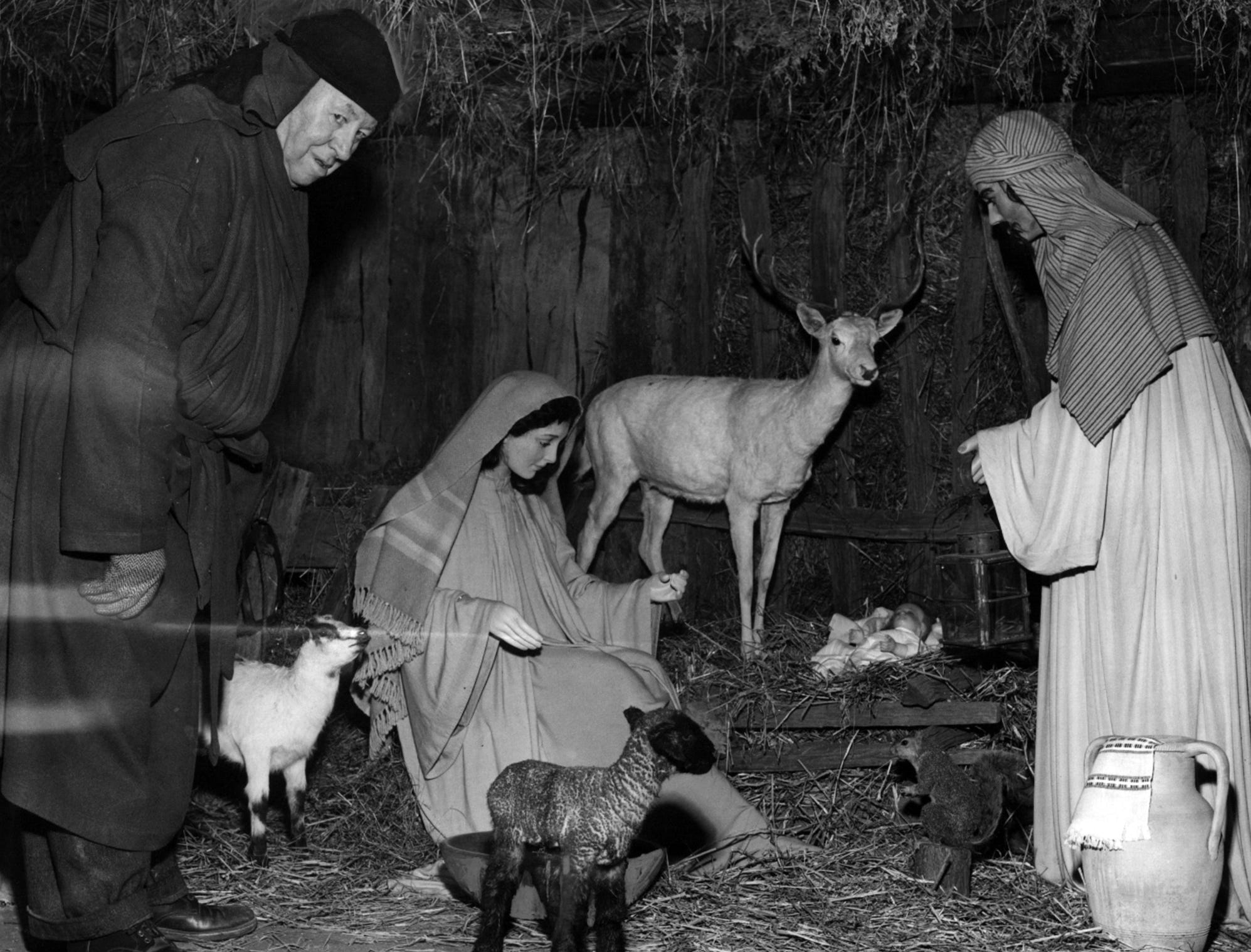A wobbly-legged lamb born last night provides extra realism to the crib scene in Lytle Park, Harry Pracht, caretaker of Lytle Crib, watches the new-born lamb as it looks at the Nativity scene. The lamb is at the center of the crib near the foot of the statue of Mary.
